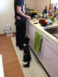 2013madoBD-kitchen