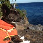 犬と一緒にカピバラ温泉。