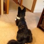 我が家の〝忠犬〟マド