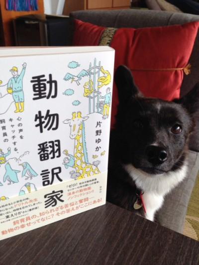 動物翻訳家&マド