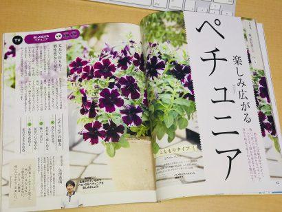 趣味の園芸4月号(2018年)に掲載の「楽しみ広がる ペチュニア」ページを担当しました。